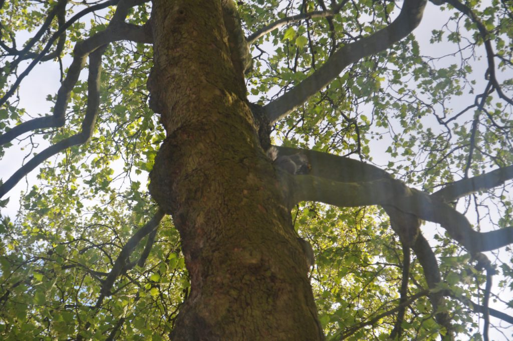 arbre ecureuil