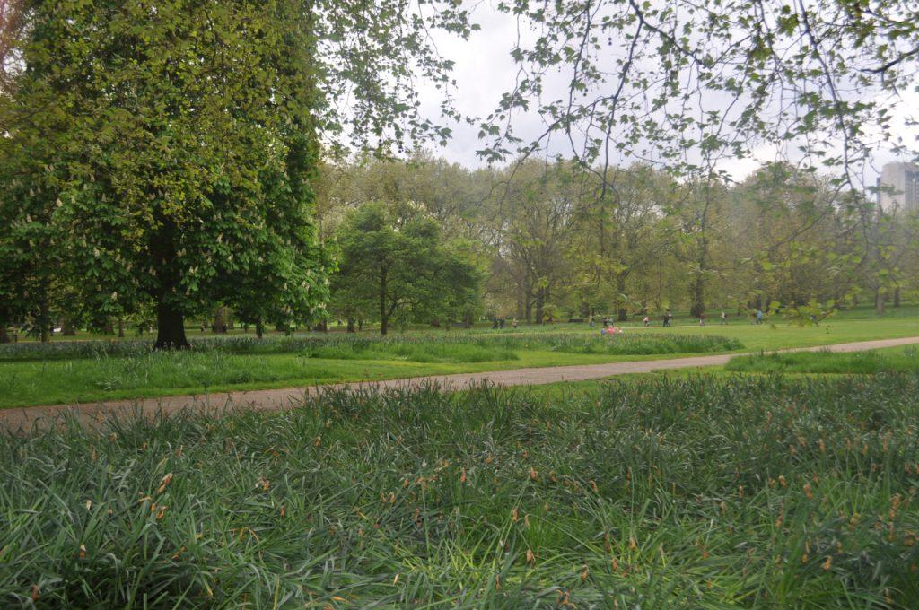 green park ecureuil